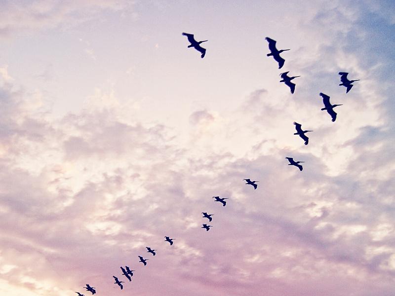 Ti sei mai chiesta se gli uccelli in volo dormono - Primavera uccelli primavera colorazione pagine ...