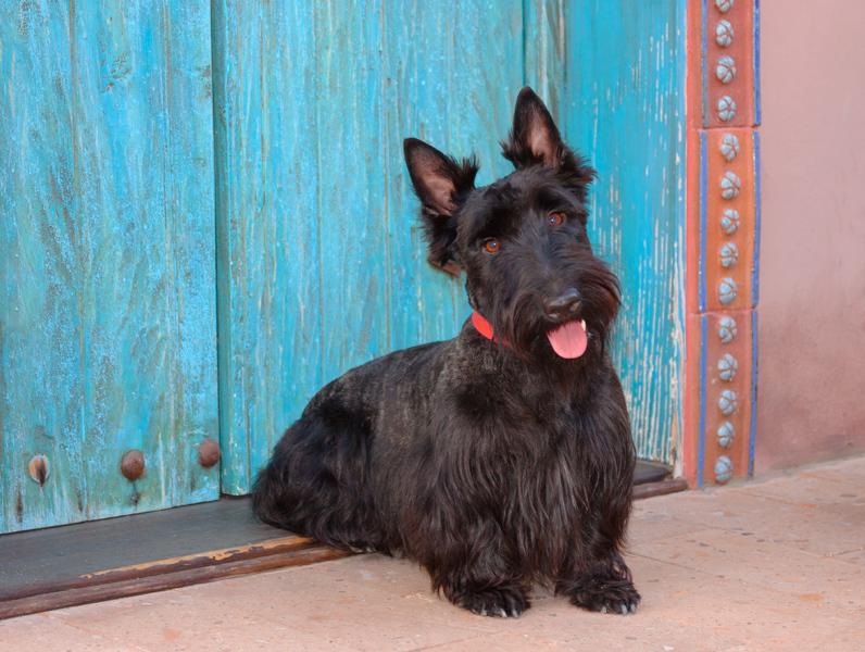 Souvent I 10 cagnolini di piccola taglia più teneri al mondo AT41